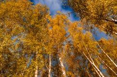 nella foresta di autunno Immagini Stock Libere da Diritti