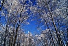 Nella foresta di inverno Immagini Stock Libere da Diritti