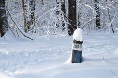 Nella foresta di inverno Fotografia Stock