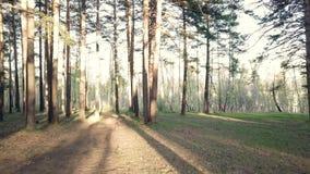 Nella foresta prima del tramonto stock footage
