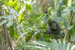 nella giungla Immagini Stock