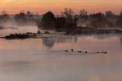 Nella mattina in anticipo di autunno all'alba, parecchie anatre hanno nuotato sulla r fotografia stock