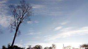 Nella mattina del cielo fotografia stock libera da diritti