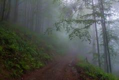 Nella nebbia Fotografie Stock Libere da Diritti