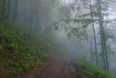Nella nebbia Fotografia Stock Libera da Diritti