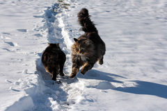 Nella neve Fotografie Stock Libere da Diritti