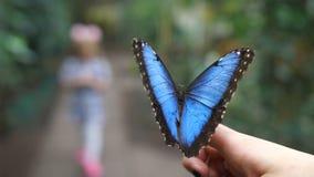 Nella priorità alta si siede una farfalla blu molto bella Nella sfuocatura nei precedenti è letto la siluetta di un piccolo video d archivio