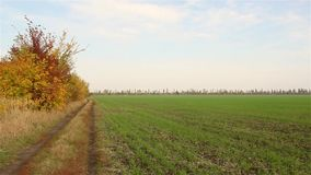 Nella strada del campo Campo russo archivi video