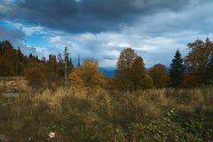 Nelle montagne, nella foresta, un giorno soleggiato luminoso immagine stock libera da diritti