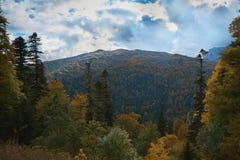 Nelle montagne, nella foresta, un giorno soleggiato luminoso fotografie stock libere da diritti