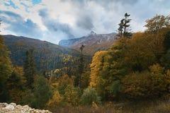 Nelle montagne, nella foresta, un giorno soleggiato luminoso fotografia stock