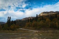 Nelle montagne, nella foresta, un giorno soleggiato luminoso immagini stock