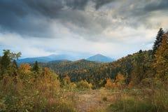 Nelle montagne, nella foresta, un giorno soleggiato luminoso fotografie stock