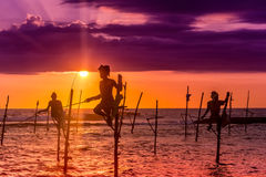 Nello Sri Lanka, un pescatore locale sta pescando nello stile unico nella sera Immagine Stock Libera da Diritti