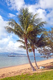 Nelly Bay Jetty and Palm Trees, Magnetic Island Townsville Austr Stock Images