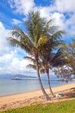 Nelly Bay Jetty y palmeras, isla magnética Townsville Austr Imagenes de archivo