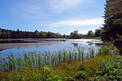 Nelly's Moss Lake. View over Nelly's Moss Lake with surrounding forest Stock Image