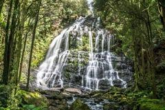 Nelson Falls, Franklin-Gordon Wild Rivers National Park, Tasmânia, Austrália Imagens de Stock