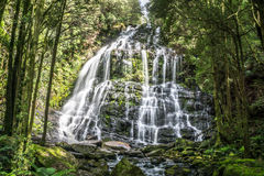 Nelson Falls Franklin-Gordon Wild Rivers National Park, Tasmanien, Australien Arkivbilder