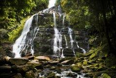 Nelson Falls, Tasmania. Nelson Falls in the beautiful Franklin - Gordon Wild Rivers National Park, Tasmania, Australia royalty free stock image