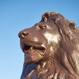 Nelson's lion head, London, sunny day Stock Photos