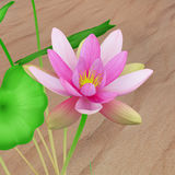 Nelumbo (Lotus) Stock Photos