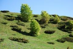Nem floresta nem arbusto Foto de Stock Royalty Free