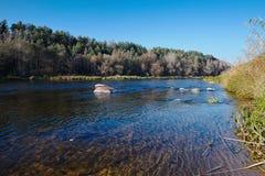 Neman-Fluss im Fall mit Segge Lizenzfreies Stockbild