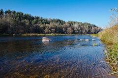 Neman River in Fall with Sedge Royalty Free Stock Image