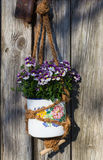 Nemesia, a half-hardy bedding plant. Nemesia, a half-hardy bedding plant in a vintage hanging basket in front of a old wooden door Stock Photography