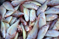 Nemipterus fisk Royaltyfria Bilder