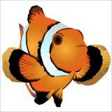 Nemo Foto de archivo libre de regalías