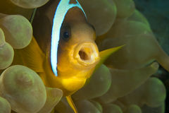 Nemo Fotografia Stock