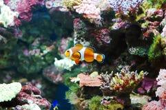 Nemo Fotografía de archivo