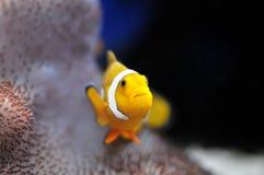Nemo Stock Images