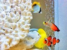 Nemo? Fotografia Stock