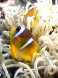 Nemo stock photo