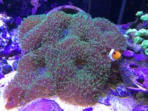 Nemo捉迷藏 库存照片
