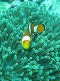 Nemo Imagen de archivo