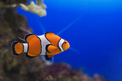 Nemo Stock Photo