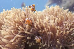 Nemo stock photos
