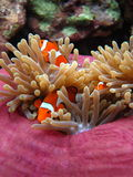 Nemo Stock Photography