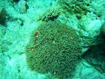 Nemo. The Nemo Cartoon Fish in underwater by Snorkeling Stock Photography