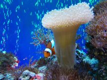 Nemo die Fische Lizenzfreies Stockbild