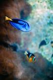 Nemo & Dory стоковая фотография
