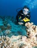 Nemo en scuba-duiker royalty-vrije stock afbeelding
