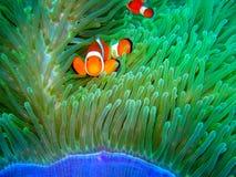 Nemo fand Lizenzfreies Stockbild