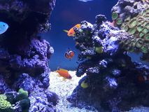 NEMO Royalty Free Stock Photography
