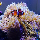 Nemo! Royalty Free Stock Images