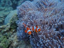 nemo photo stock